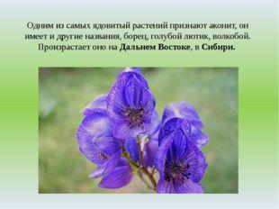 Одним из самых ядовитый растений признают аконит, он имеет и другие названия,