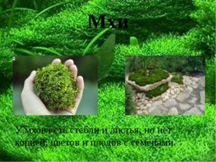 Мхи У мхов есть стебли и листья, но нет корней, цветов и плодов с семенами.
