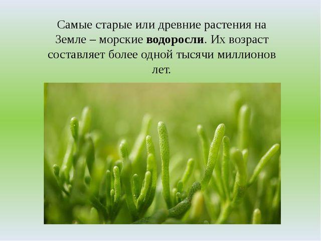 Самые старые или древние растения на Земле – морские водоросли. Их возраст со...