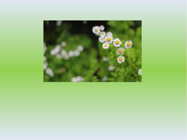 Ботаника – наука о растениях. Ботаника – один из разделов биологии.