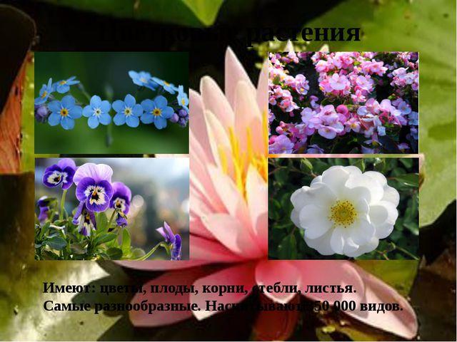 Цветковые растения Имеют: цветы, плоды, корни, стебли, листья. Самые разнообр...