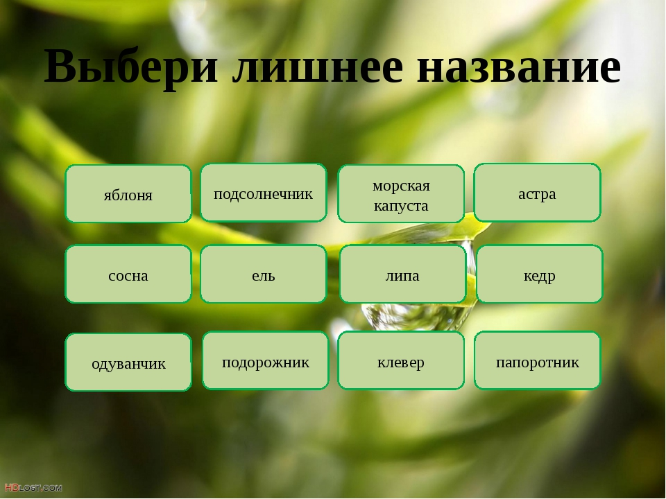 Выбери лишнее название яблоня подсолнечник морская капуста астра кедр липа ел...