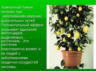 Комнатный лимон полезен при заболеваниях верхних дыхательных путей. Положите