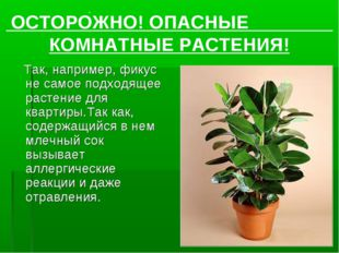 Так, например, фикус не самое подходящее растение для квартиры.Так как, соде