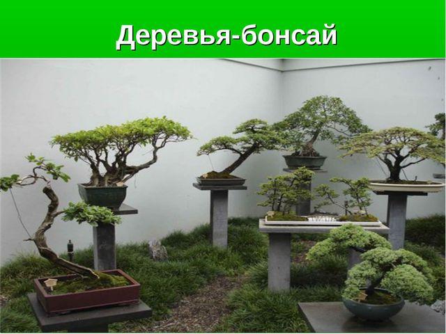 Деревья-бонсай