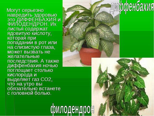 Могут серьезно навредить здоровью это ДИФФЕНБАХИЯ и ФИЛОДЕНДРОН. Их листья с...