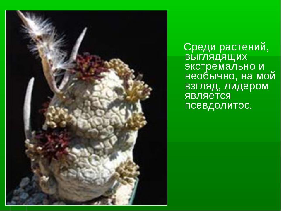 Среди растений, выглядящих экстремально и необычно, на мой взгляд, лидером я...