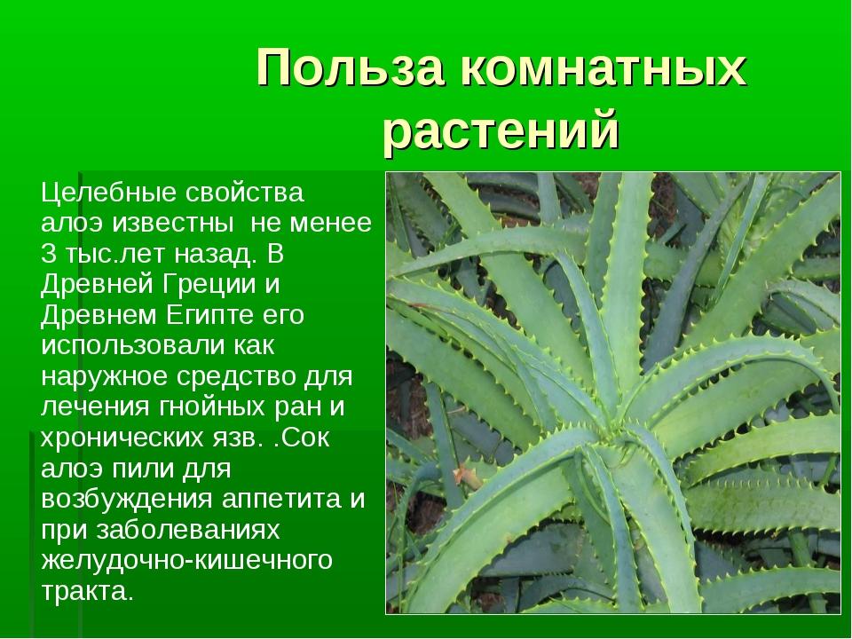 Польза комнатных растений Целебные свойства алоэ известны не менее 3 тыс.лет...