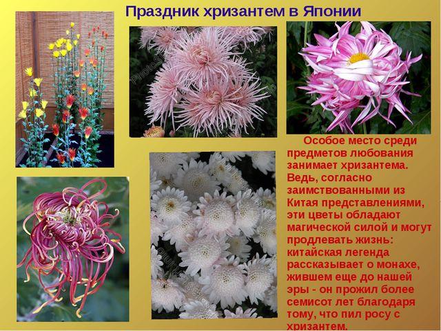 Особое место среди предметов любования занимает хризантема. Ведь, согласно з...