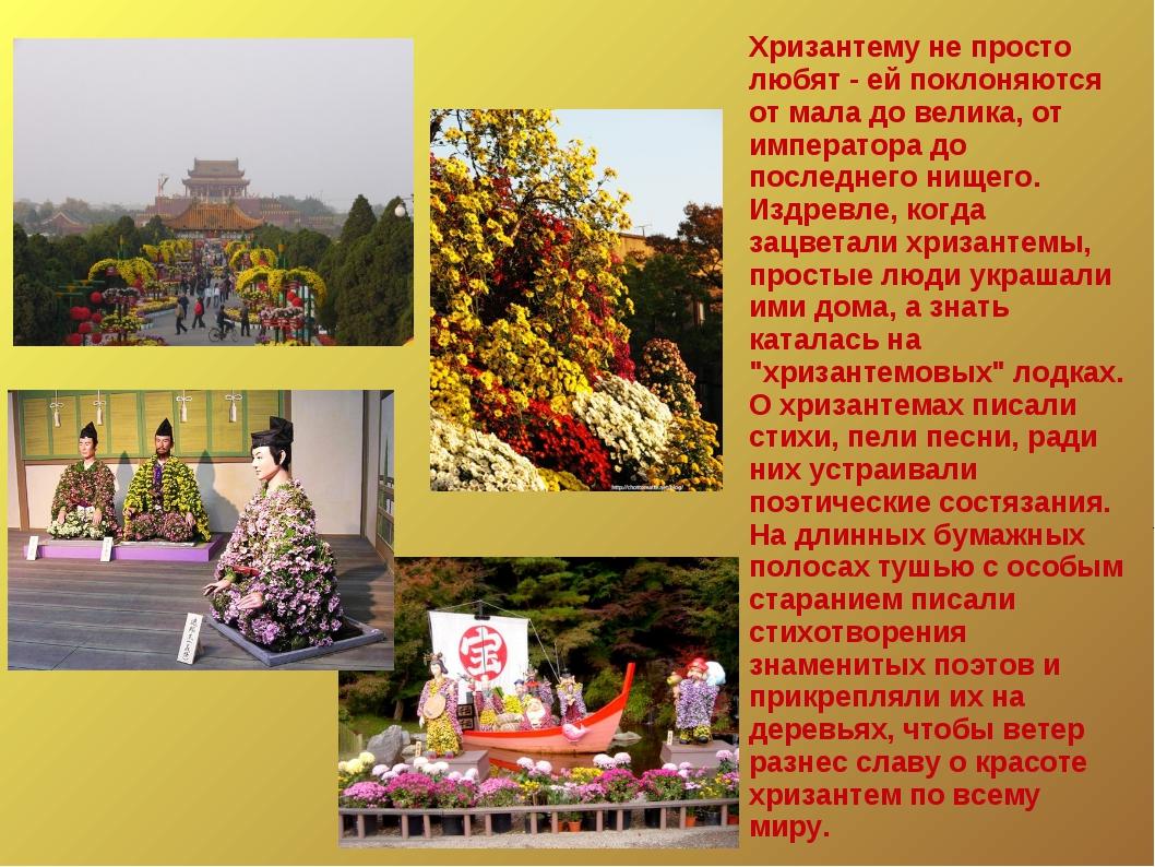 Хризантему не просто любят - ей поклоняются от мала до велика, от императора...