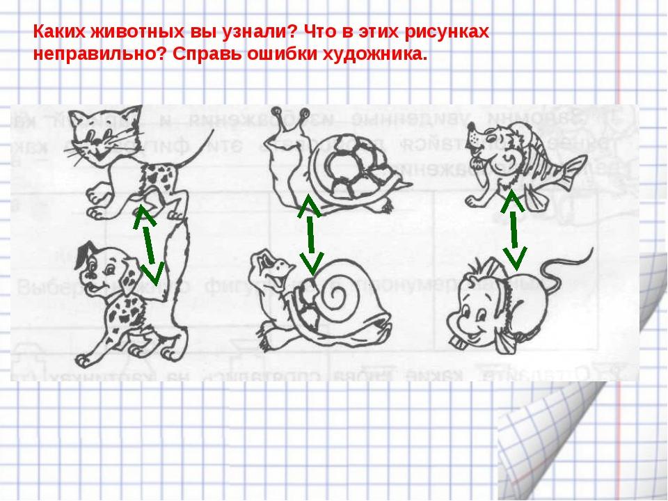 Каких животных вы узнали? Что в этих рисунках неправильно? Справь ошибки худо...