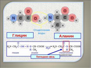Пептидная связь – это ковалентная связь, которой связаны аминокислоты в молек