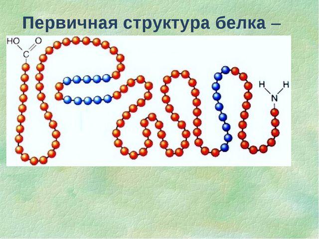 Первичная структура белка – последовательность чередования аминокислотных ост...