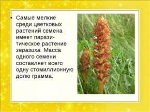 Самые мелкие среди цветковых растений семена имеет парази- тическое растение