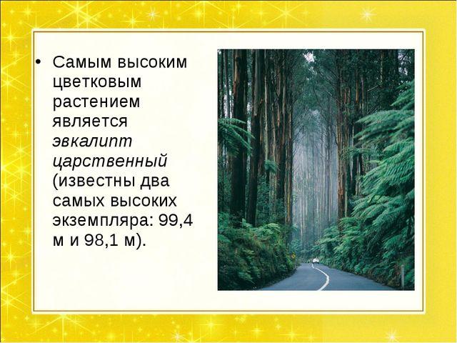 Самым высоким цветковым растением является эвкалипт царственный (известны два...