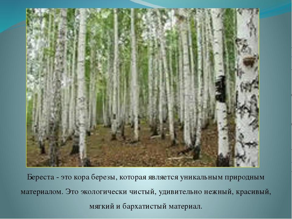 Береста - это кора березы, которая является уникальным природным материалом....