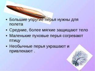 Большие упругие перья нужны для полета Средние, более мягкие защищают тело Ма