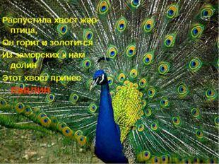Распустила хвост жар-птица, Он горит и золотится Из заморских к нам долин Это
