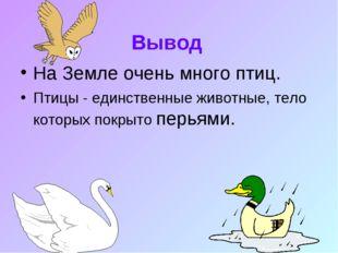 Вывод На Земле очень много птиц. Птицы - единственные животные, тело которых