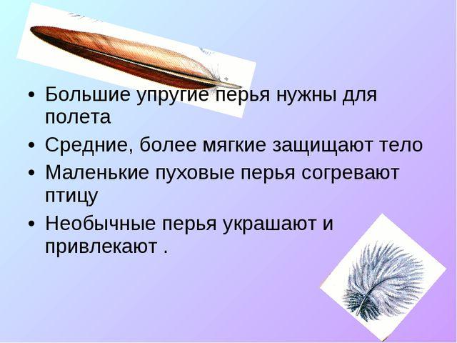 Большие упругие перья нужны для полета Средние, более мягкие защищают тело Ма...