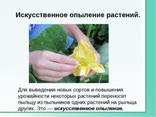 Искусственное опыление растений. Для выведения новых сортов и повышения урожа