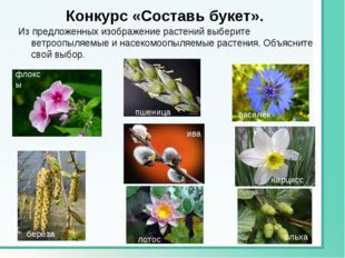 Конкурс «Составь букет». Из предложенных изображение растений выберите ветроо