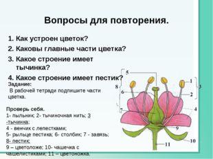 Вопросы для повторения. 1. Как устроен цветок? 2. Каковы главные части цветка