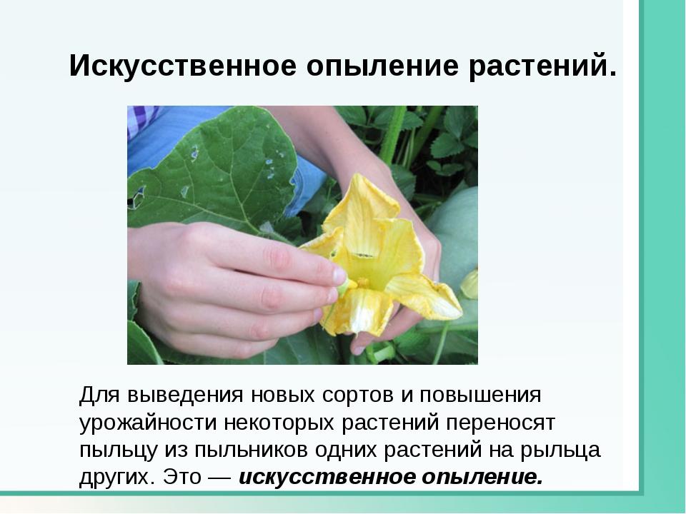 Искусственное опыление растений. Для выведения новых сортов и повышения урожа...