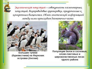 Экологическая популяция – совокупность элементарных популяций, внутривидовые