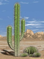 http://science-all.com/images/cactus/cactus-01.jpg