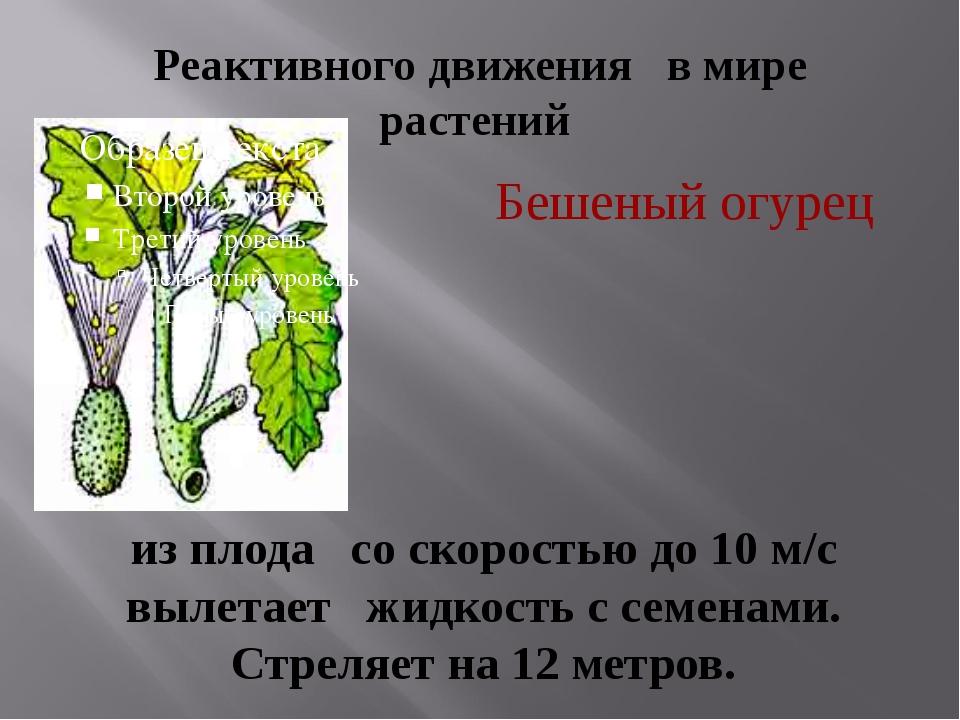 Реактивного движения в мире растений Бешеный огурец из плода  со скоростью д...