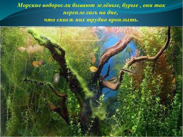 Морские водоросли бывают зелёные, бурые , они так переплелись на дне, что скв...