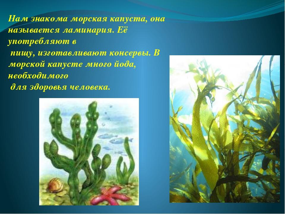 Нам знакома морская капуста, она называется ламинария. Её употребляют в пищу,...