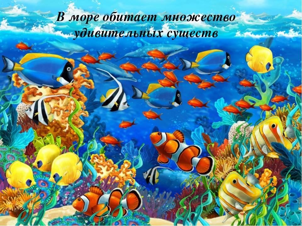 В море обитает множество удивительных существ