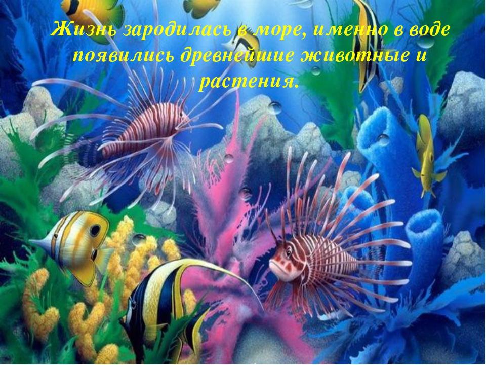 Жизнь зародилась в море, именно в воде появились древнейшие животные и растен...