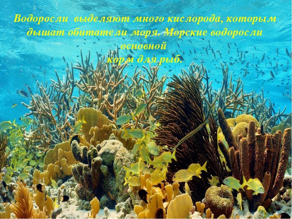 Водоросли выделяют много кислорода, которым дышат обитатели моря. Морские во...
