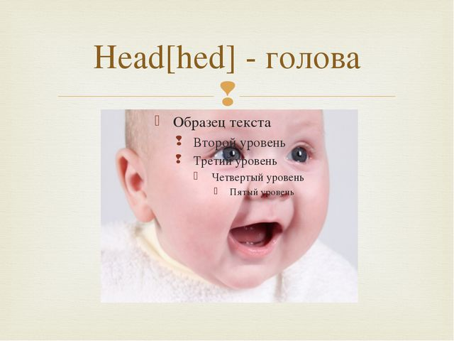 Head[hed] - голова 
