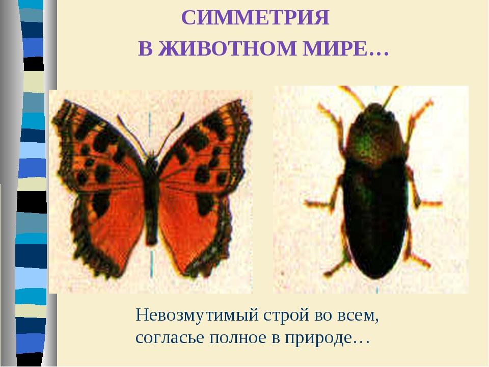 Невозмутимый строй во всем, согласье полное в природе… СИММЕТРИЯ В ЖИВОТНОМ М...