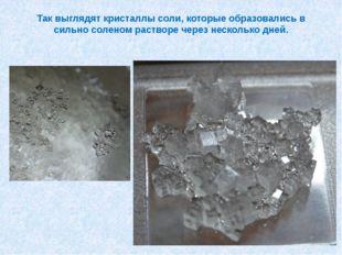 Так выглядят кристаллы соли, которые образовались в сильно соленом растворе ч