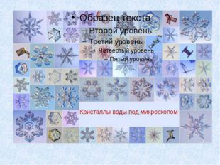 Кристаллы воды Кристаллы воды под микроскопом