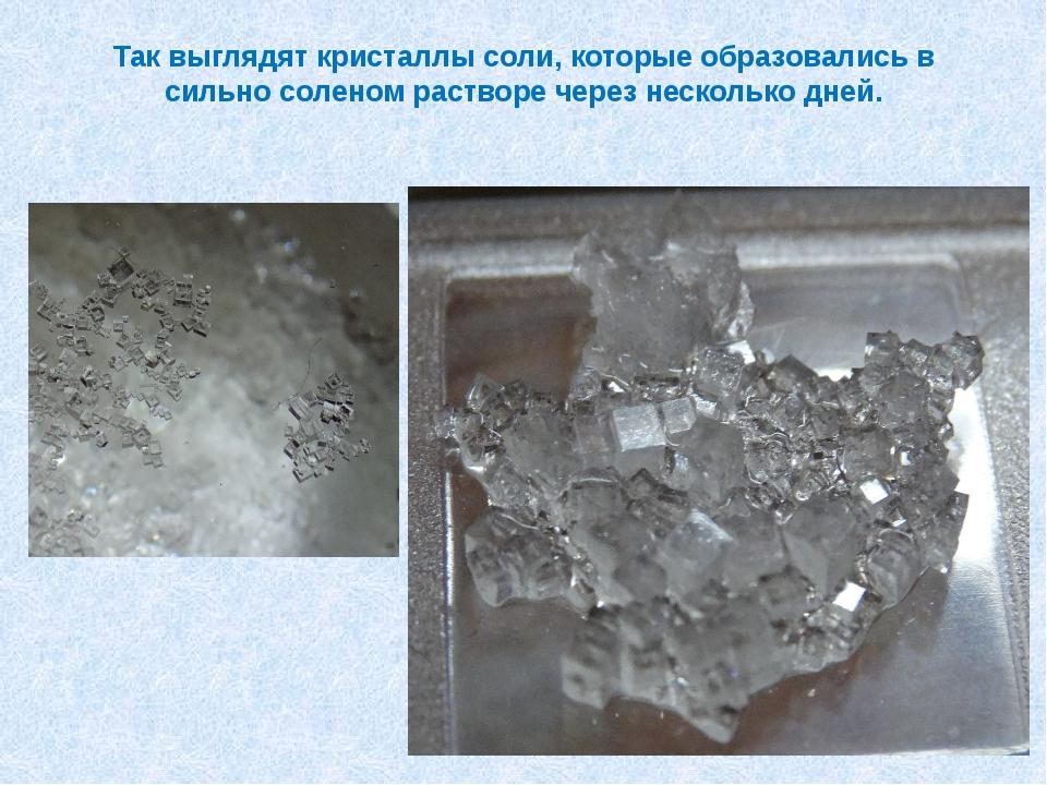 Так выглядят кристаллы соли, которые образовались в сильно соленом растворе ч...