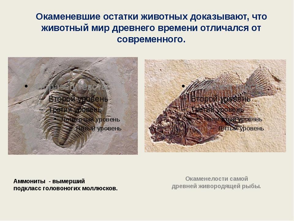 Окаменевшие остатки животных доказывают, что животный мир древнего времени от...