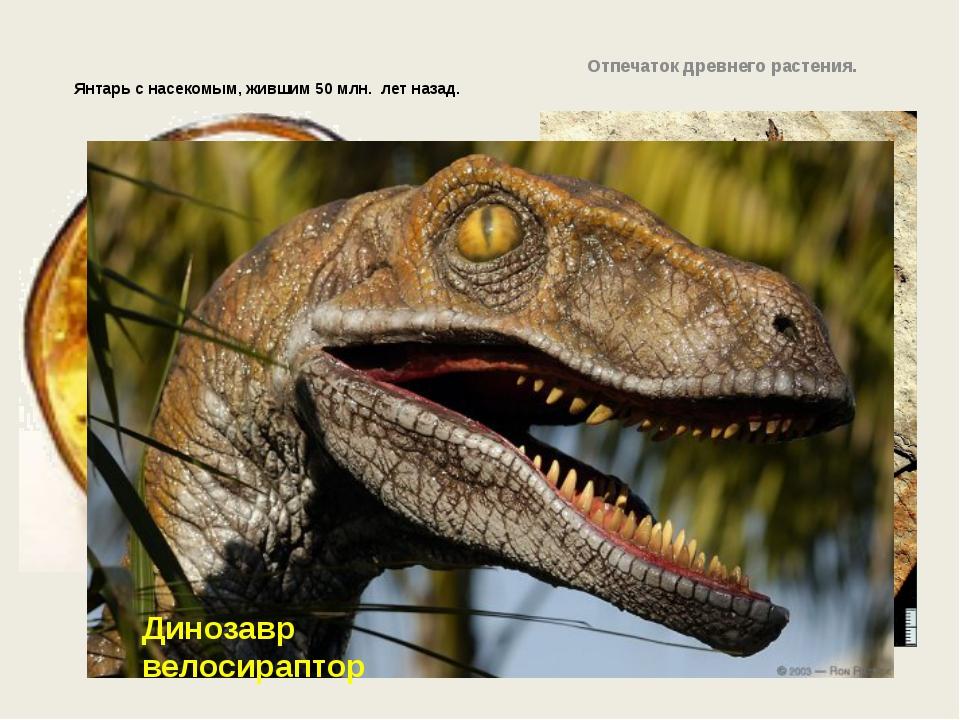 Янтарь с насекомым, жившим 50 млн. лет назад. Отпечаток древнего растения. Ди...