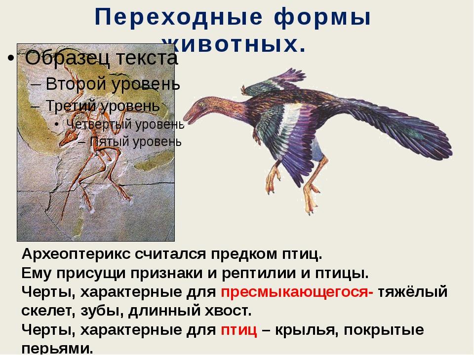 Переходные формы животных. Археоптерикс считался предком птиц. Ему присущи пр...