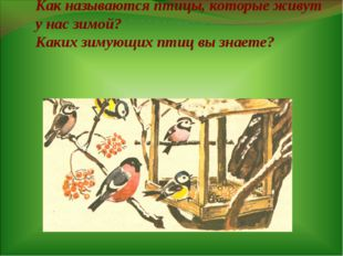 Как называются птицы, которые живут у нас зимой? Каких зимующих птиц вы знае