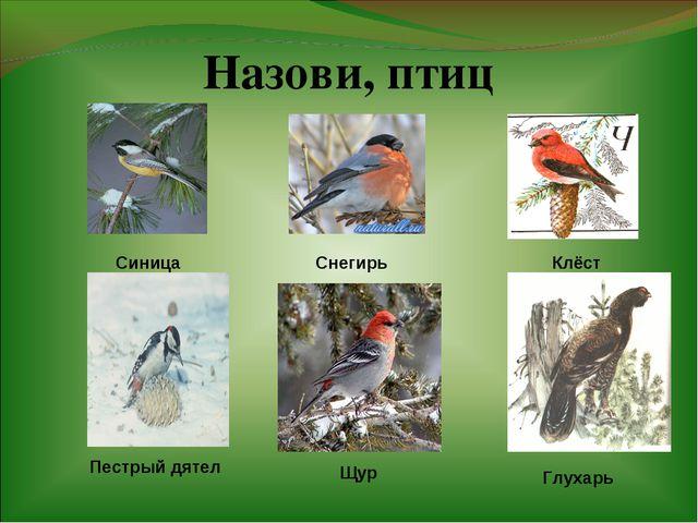 Назови, птиц Клёст Снегирь Синица Пестрый дятел Щур Глухарь