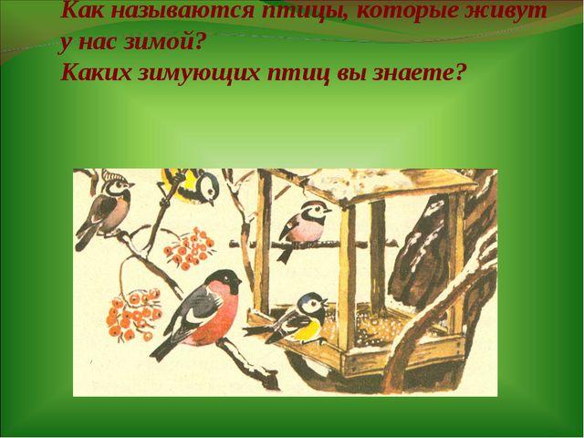 Как называются птицы, которые живут у нас зимой? Каких зимующих птиц вы знае...