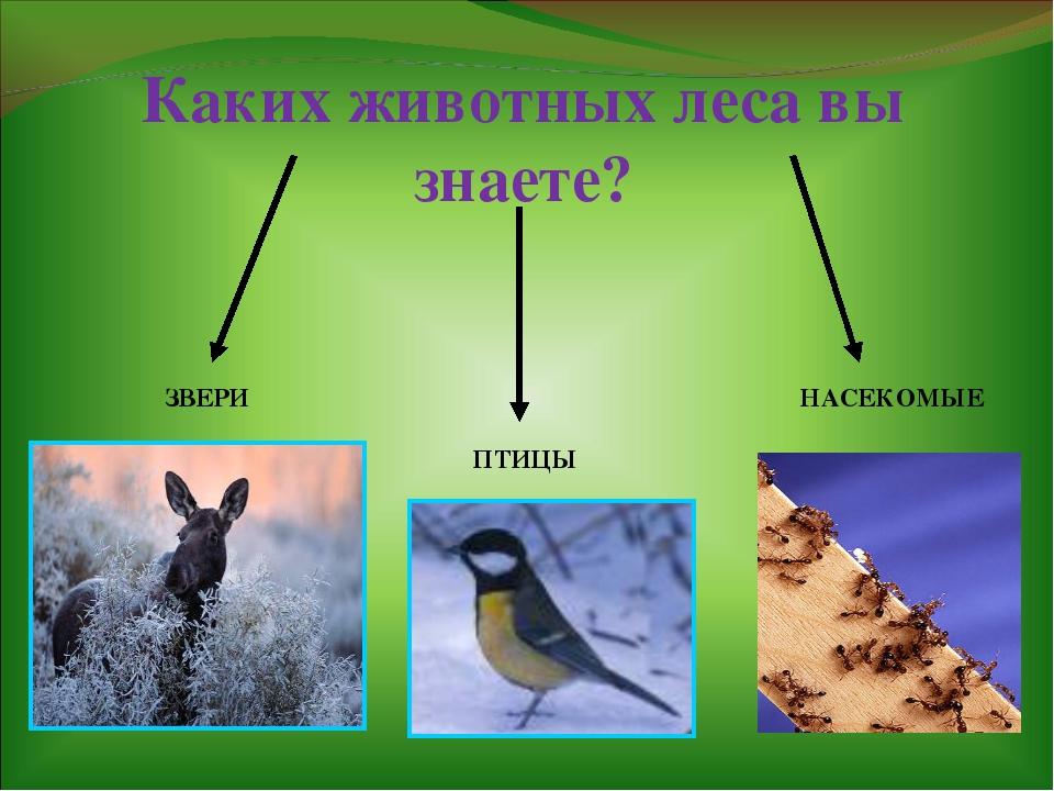 Каких животных леса вы знаете? ЗВЕРИ ПТИЦЫ НАСЕКОМЫЕ