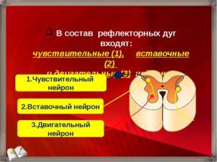 В состав рефлекторных дуг входят: чувствительные (1), вставочные (2) и двигат