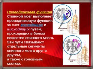 Проводниковая функция Спинной мозг выполняет проводниковую функцию за счет во